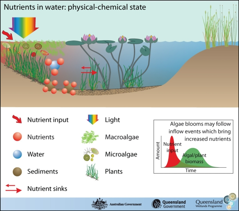 How Light Affects Plant Growth
