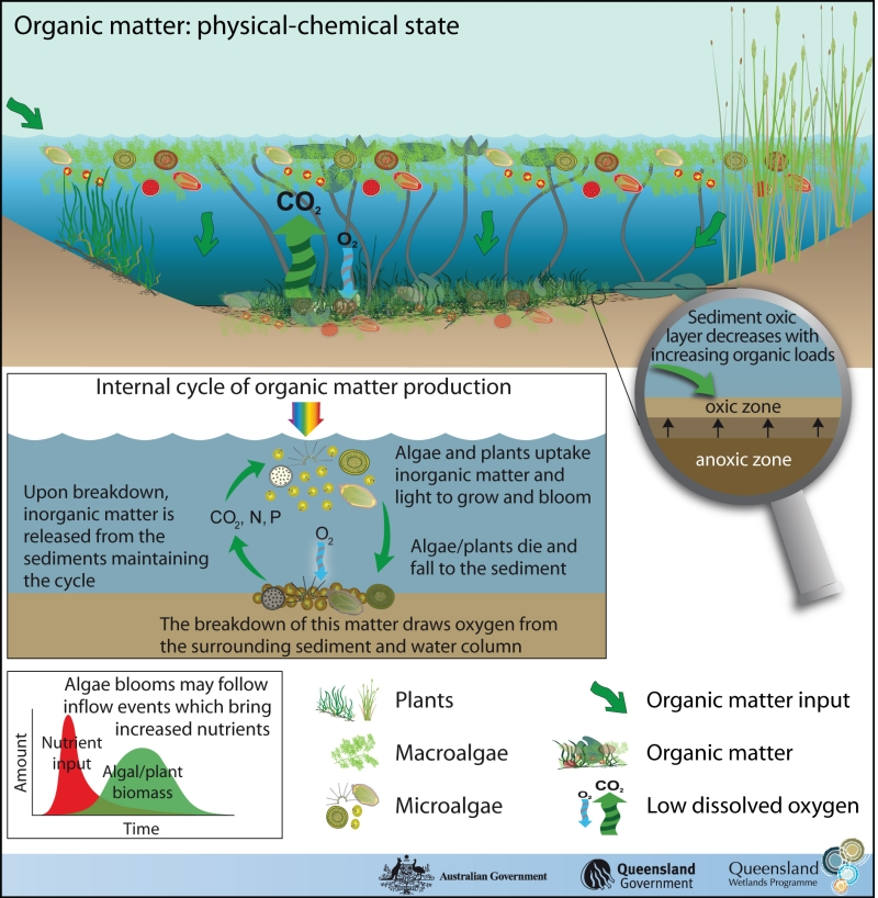 Organic Matter State Department Of Environment And Science