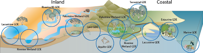 Groundwater Dependent Ecosystems Department Of Environment And Science