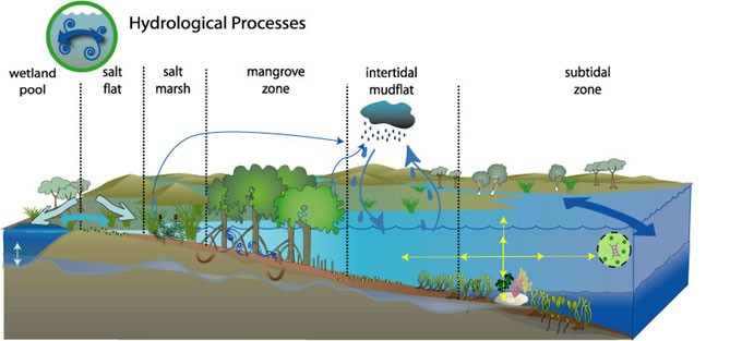 OzCoasts Conceptual Model - Hyrdological Processes. Image by OzCoasts, 2013