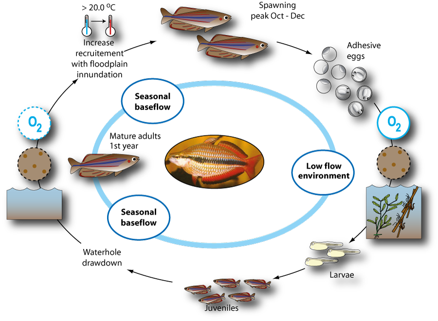 Sea fish life cycle for Fish life cycle