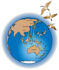 The East Asian—Australasian Flyway, Image by DES
