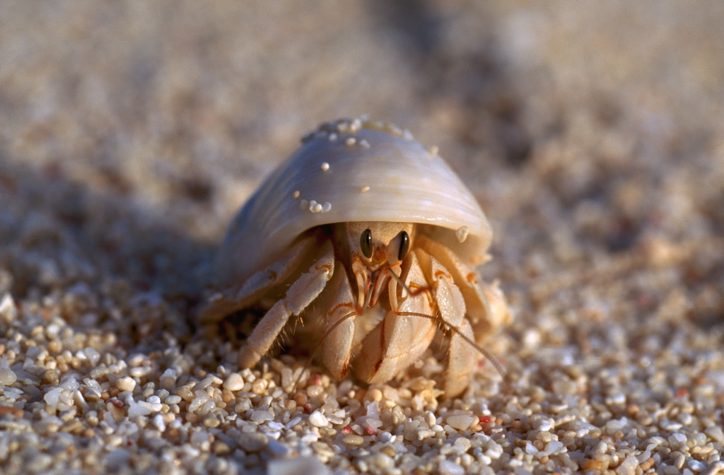 Crustaceans (Department of Environment and Heritage Protection)
