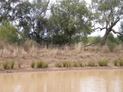 Sparce riparian vegetation Photo by Queensland Government