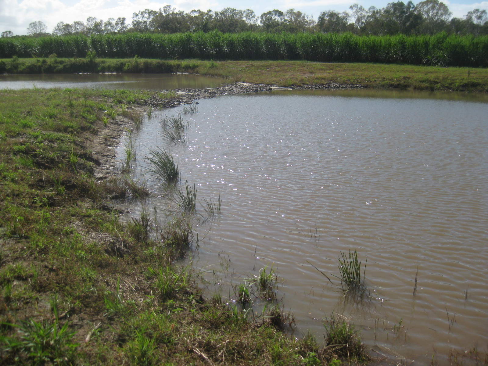 Myers wetland outlet. Photo by Queensland Government.