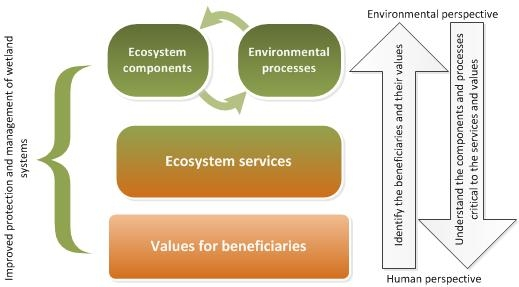 Relationship between wetlands (components, processes), ecosystem services and the values for different beneficiaries by Queensland Wetlands Program, 2013