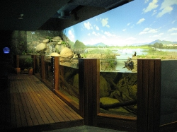 Wetland exhibit
