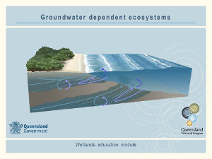 Groundwater dependent ecosystems