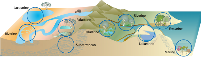 the different biomes present in nature